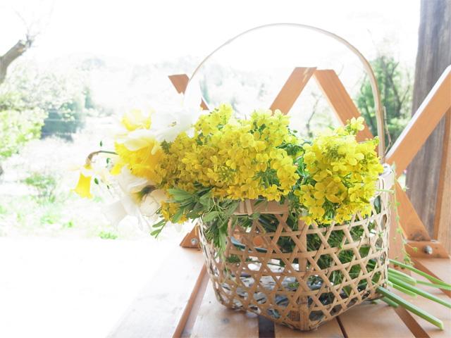 菜の花と水仙