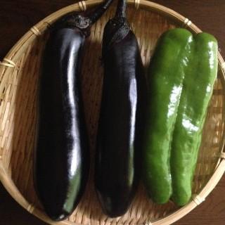 鳥取県あおぞら農園の茄子とピーマン