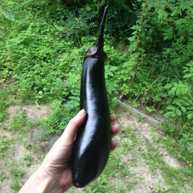 鳥取県あおぞら農園の茄子