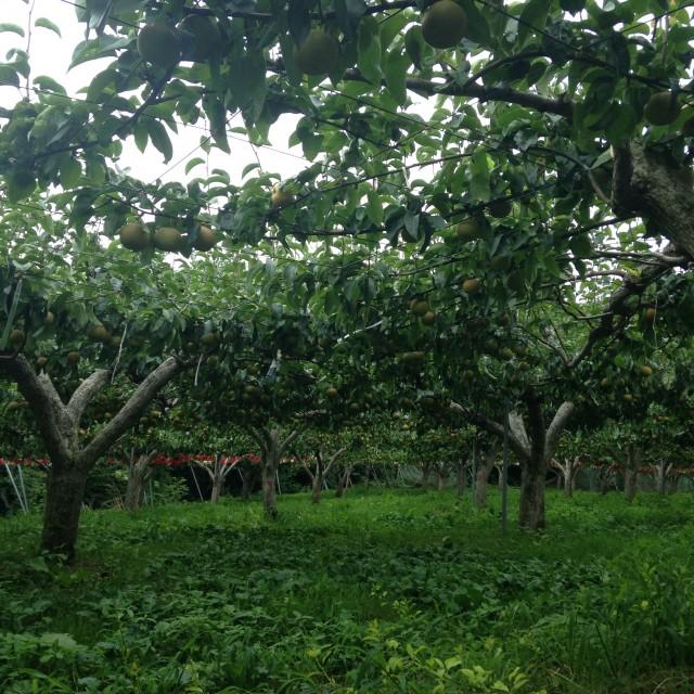 谷代果樹園
