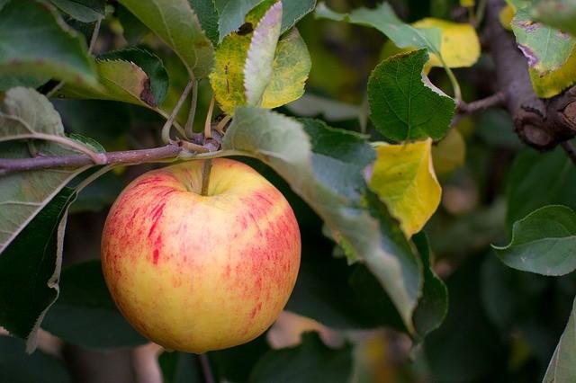 apple-535540_640