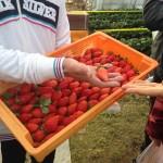 おいしいイチゴの例を説明していただいてます