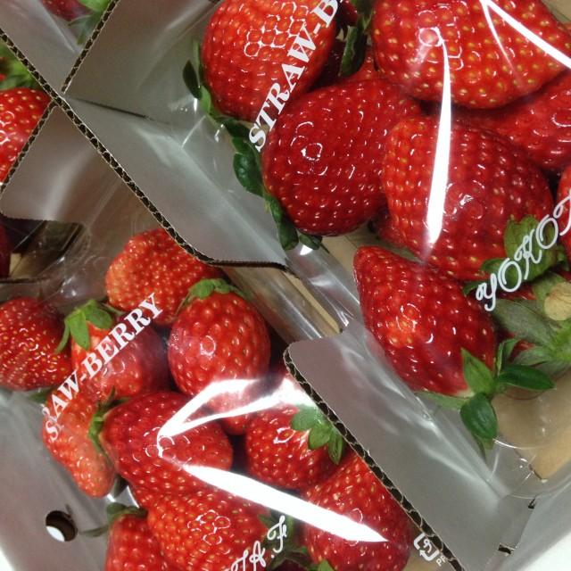 横田農園のイチゴ