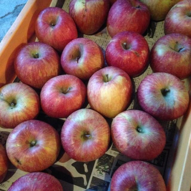 一般用のリンゴ