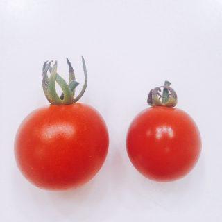 トマトのヘタ比較