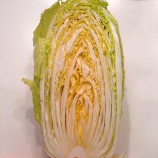 白菜の断面図