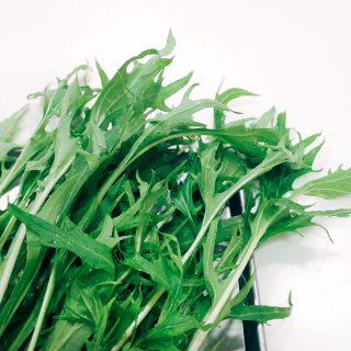 水菜の葉先