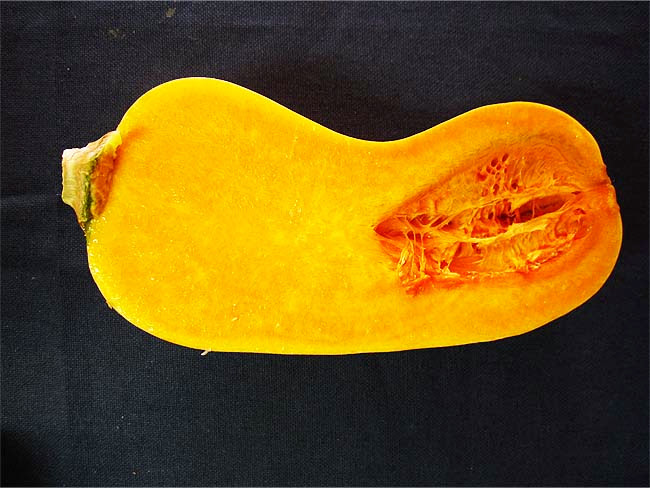バターナッツ断面図